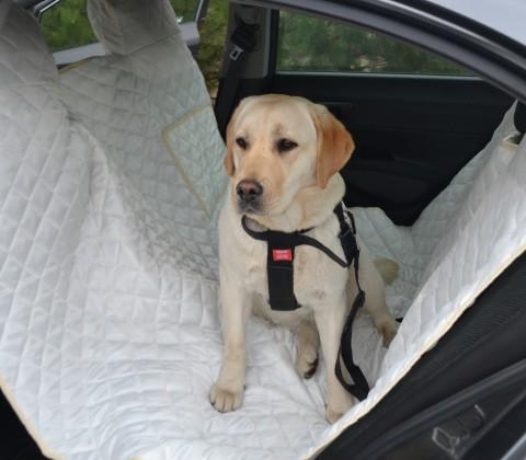 Autoschondecke, Autoschutzdecke, Hundedecke, 160 x 140 cm, Creme