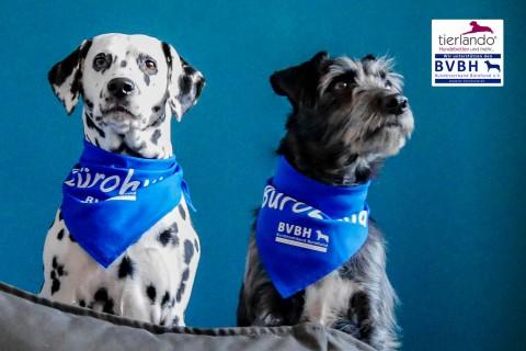 DUO SET | Orthopädisches Hundebett OFFICE ORTHO PLUS mit Matratzenschoner Polyester