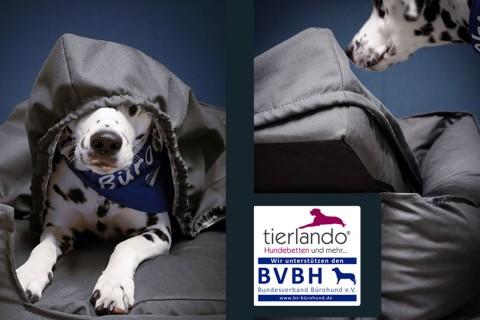 DUO SET | Orthopädisches Hundebett OFFICE ORTHO PLUS mit Matratzenschoner XXL 150 cm Polyester Graphit