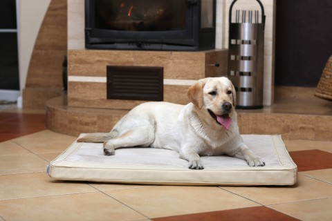 Orthopädische Hundematratze CARLOS VISCO L 100 cm Velours-Kunstleder Creme L | Creme