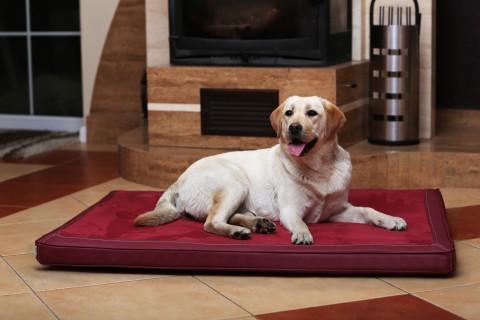 Orthopädische Hundematratze CARLOS VISCO XL 120 cm Velours-Kunstleder Bordeaux-Rot XL | Bordeaux-Rot