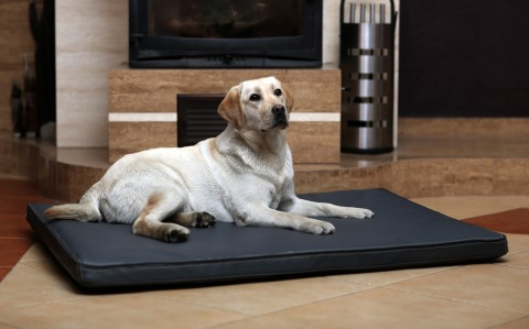 Orthopädische Hundematratze CARLOS VISCO XL 120 cm Kunstleder Graphit
