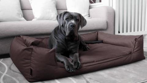 Orthopädisches Hundebett GOOFY VISCO L+ 110 cm Polyester 600D Braun L | Braun