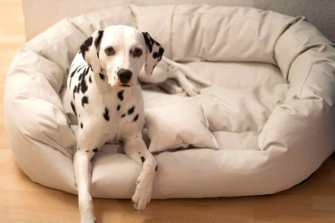 Hundebett ARES XL 110 cm Polyester 600D Creme