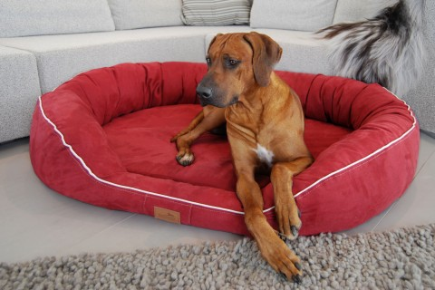 Orthopädisches Hundebett MARLON VISCO PLUS M 85 cm Velours Bordeaux-Rot M | Bordeaux-Rot