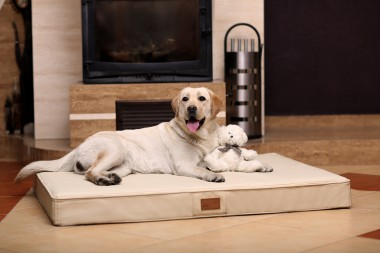 Orthopädische Hundematratze OSCAR  VISCO XL 120 cm Kunstleder Creme XL | Creme