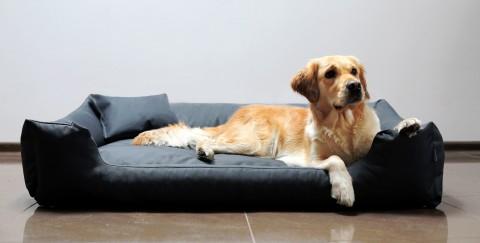 Hundebett MORITZ KOMFORT M+ 90 cm | fest gewebtes Polyester | Graphit M | Graphit