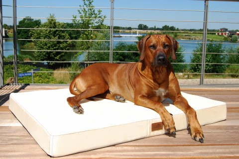 Hundematratze HUGO BASIC XL 120 cm Polyester 210D Creme XL | Creme