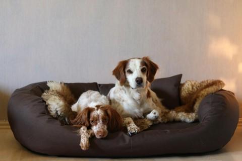 Orthopädisches Hundebett ARES VISCO XL 110 cm Polyester 600D Braun XL | Braun