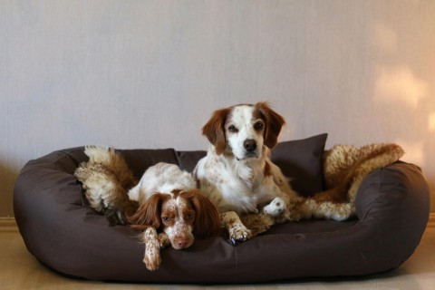 Orthopädisches Hundebett ARES VISCO XXL 145 cm Polyester 600D Braun