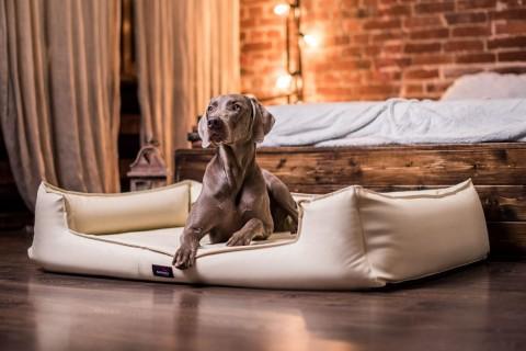 Orthopädisches Hundebett GOOFY VISCO L+ 110cm Kunstleder Creme