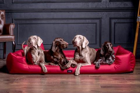 Orthopädisches Hundebett GOOFY VISCO Polyester 600D