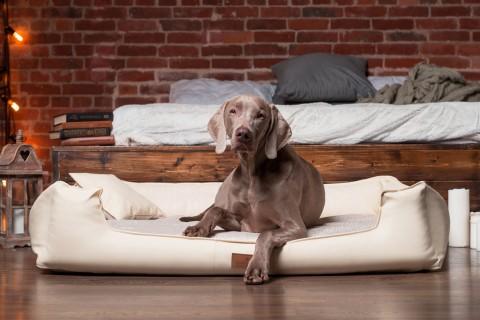 Orthopädisches Hundebett LINUS VISCO PLUS L+ 110 cm Kunstleder Polyester Creme L | Beige-Creme
