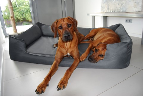 Orthopädisches Hundebett GOOFY VISCO L 100 cm Polyester 600D Graphit