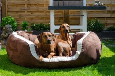 Orthopädisches Hundebett PEPPER ORTHO PLUS XXL 160 cm Velours Braun XXL | Braun