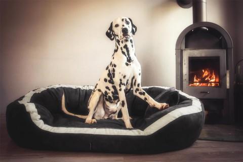 Orthopädisches Hundebett PEPPER ORTHO PLUS XL 135 cm Velours Graphit XL |