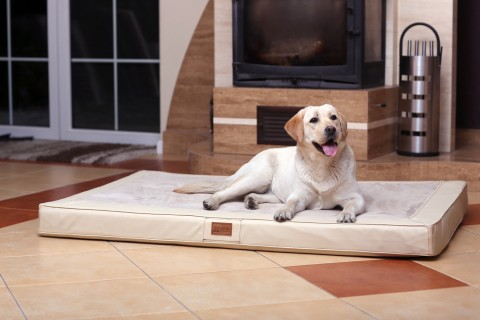 Orthopädische Hundematratze OSCAR VISCO XXL 150 cm Velours Kunstleder Creme XXL | Creme