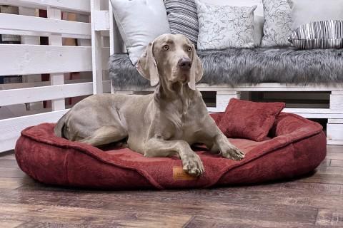 Orthopädisches Hundebett XENIA