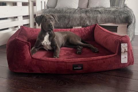Orthopädisches Hundebett FRANKLIN XL+ | Bordeaux
