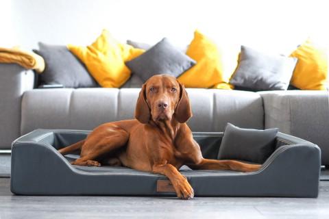Orthopädisches Hundebett MELODY LATEX-Matratzenkern XL 120 cm Kunstleder Graphit XL | Graphit
