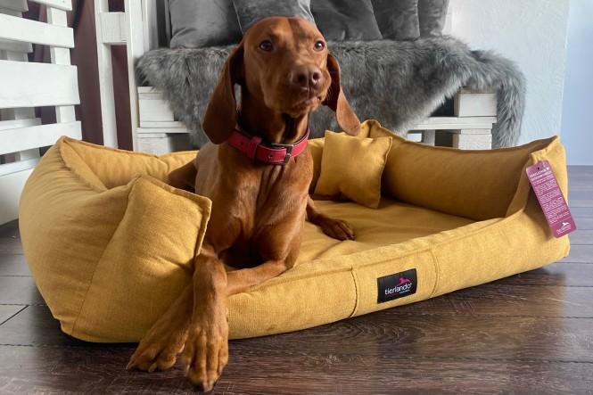 SCARLETT | Orthopädisches Hundebett M+ | Senfgelb