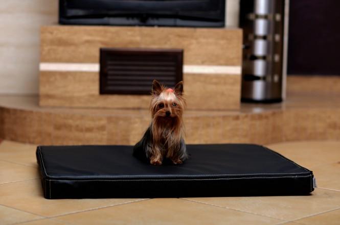 CARLOS | Orthopädische Hundematratze - M | Schwarz