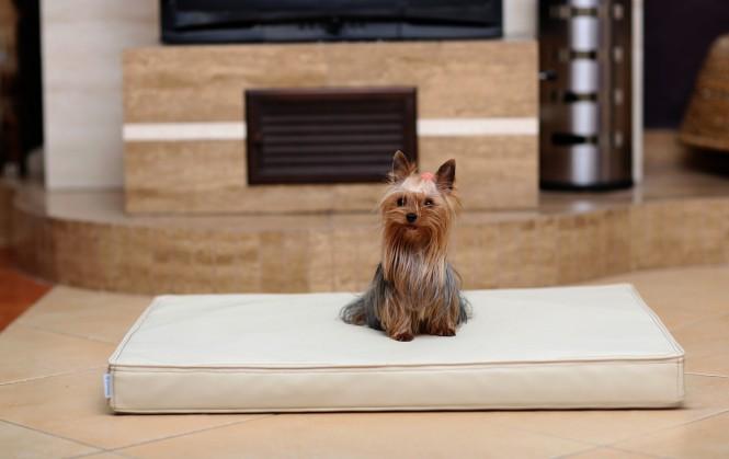 Orthopädische Hundematratze CARLOS VISCO M 80 cm Kunstleder Creme M | Creme