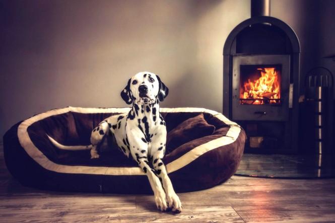 PEPPER SOFT | Orthopädisches Hundesofa
