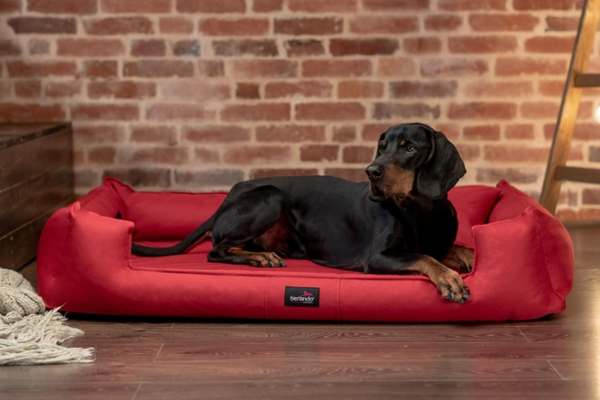GOOFY | Orthopädisches Hundebett - M+ | Rot