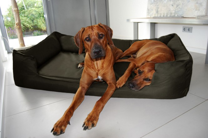 GOOFY | Orthopädisches Hundebett - L+ | Olive Grün
