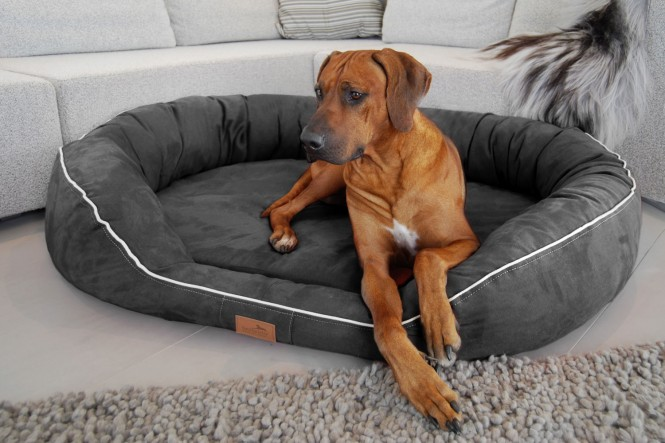 Orthopädisches Hundebett MARLON VISCO PLUS L 100 cm Velours Graphit - L | Graphit