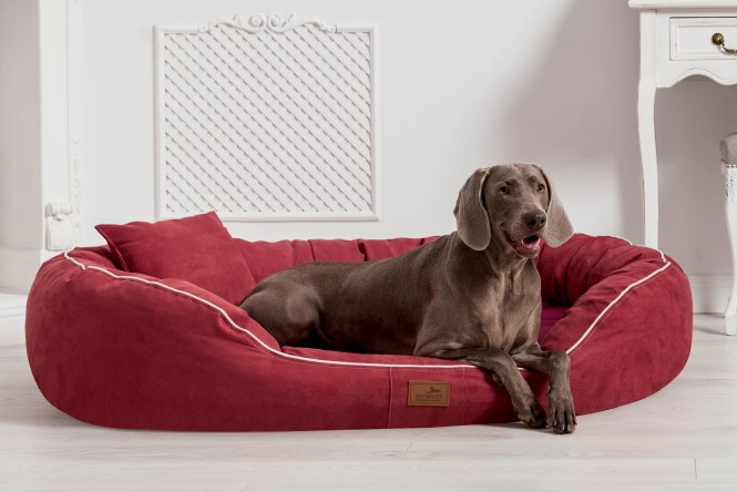 MARLON SOFT | Orthopädisches Hundebett