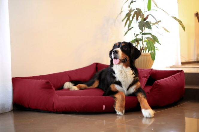 Hundebett TRIVIA M 80 cm Polyester 600D Bordeaux-Rot M | Bordeaux-Rot
