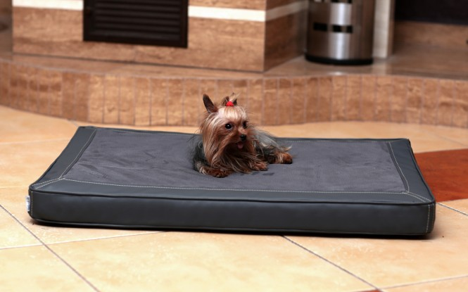 Orthopädische Hundematratze CARLOS VISCO M 80 cm Velours-Kunstleder Graphit - M | Graphit