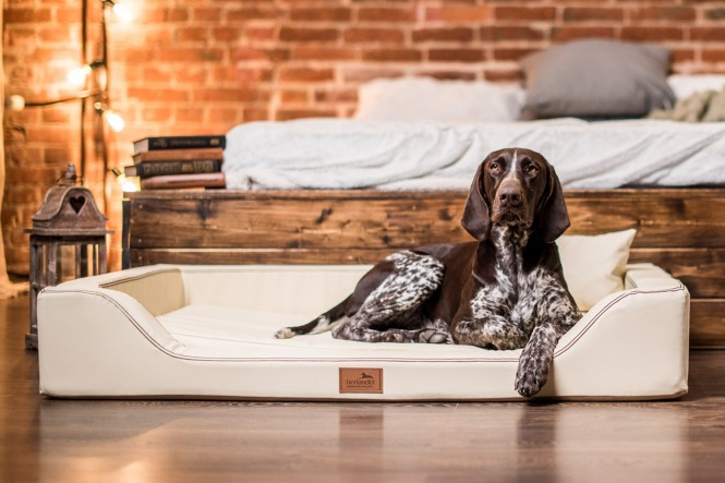 Orthopädisches Hundebett MELODY LATEX-Matratzenkern M 85 cm Kunstleder Creme M | Creme