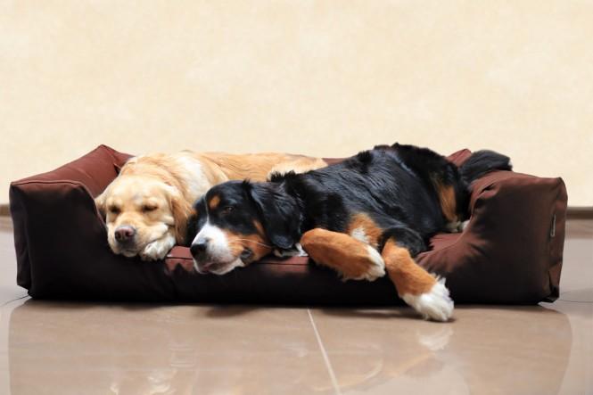 Hundebett MORITZ KOMFORT XL+ 130 cm | fest gewebtes Polyester | Braun - XL+ | Braun