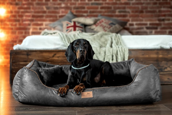 ALBERTO | Orthopädisches Hundebett M | Graphit