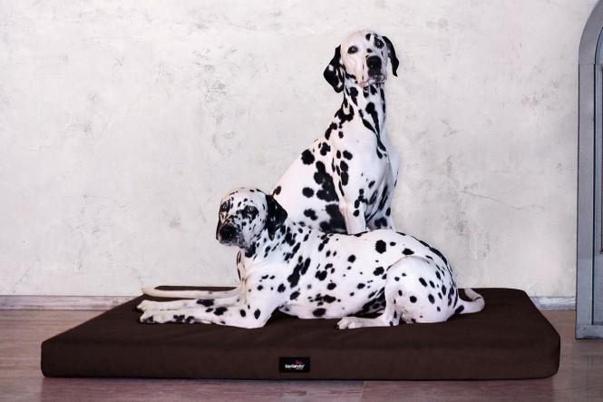 ALICE ANTIRUTSCH   Orthopädische Hundematratze M   Braun