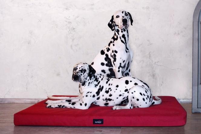 ALICE ANTIRUTSCH   Orthopädische Hundematratze - M   Bordeaux-Rot