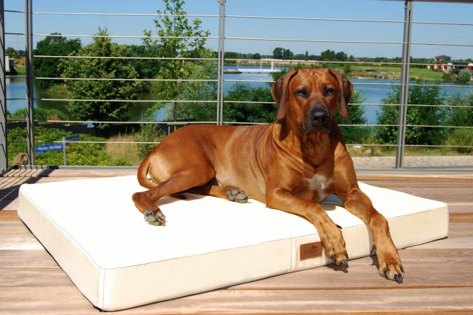 Orthopädische Hundematratze HUGO VISCO PLUS Polyester 210D