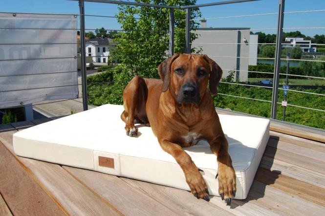 Orthopädische Hundematratze HUGO VISCO PLUS M 80 cm Polyester 210D Creme M | Creme