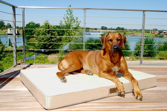 Hundematratze HUGO BASIC M 80 cm Polyester 210D Creme M | Creme