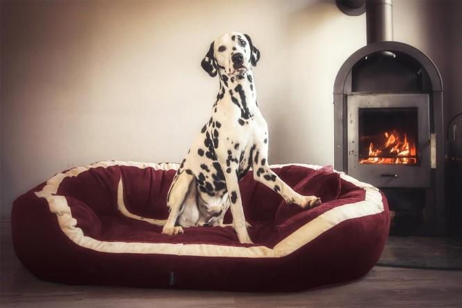 Orthopädisches Hundebett PEPPER ORTHO PLUS L 110 cm Velours Bordeaux-Rot L | Bordeaux-Rot