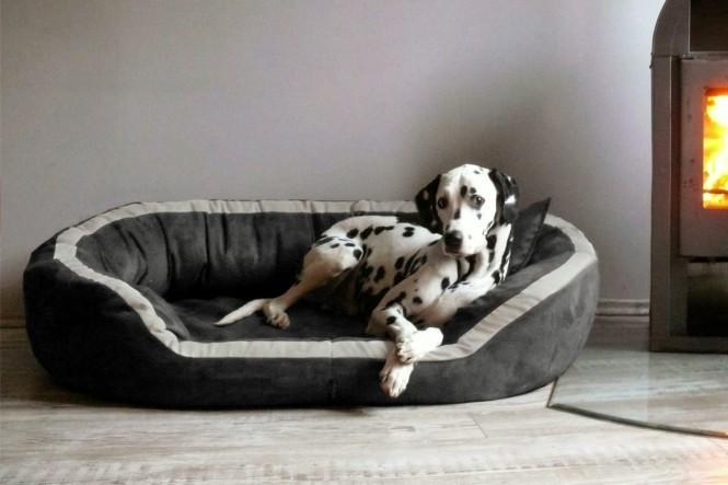Orthopädisches Hundebett PEPPER ORTHO PLUS L 110 cm Velours Graphit L | Graphit