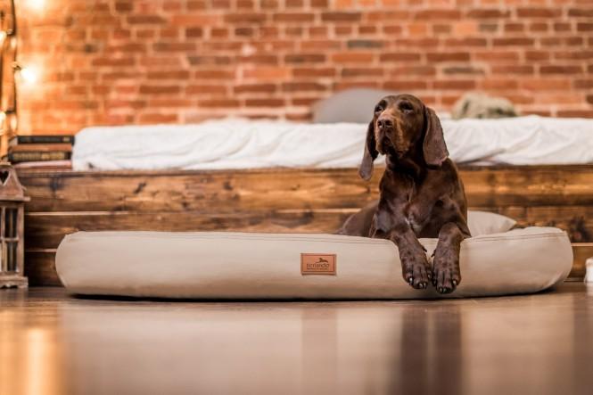GILBERT | Orthopädische Hundematratze M | Beige