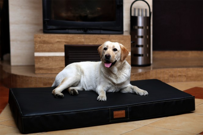 Orthopädische Hundematratze OSCAR VISCO Kunstleder