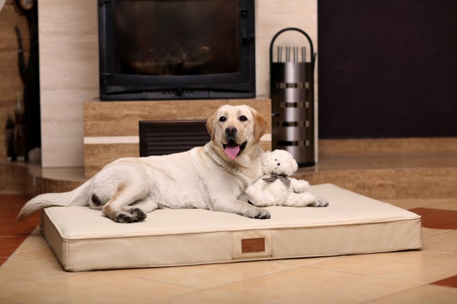 Orthopädische Hundematratze OSCAR VISCO L 100 cm Kunstleder Creme L | Creme