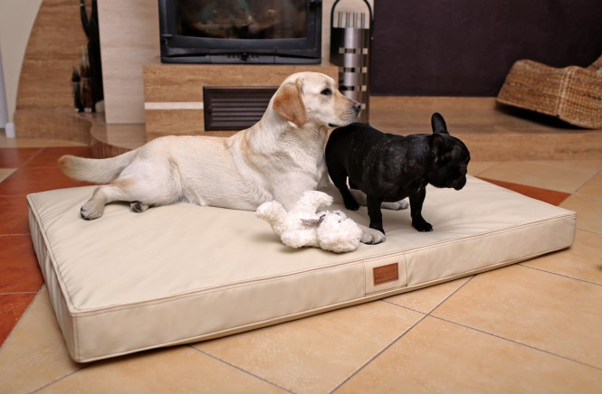 OSCAR EASY CLEAN | Orthopädische Hundematratze - XXL | Creme