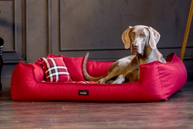 SCOTCH | Orthopädisches Hundebett
