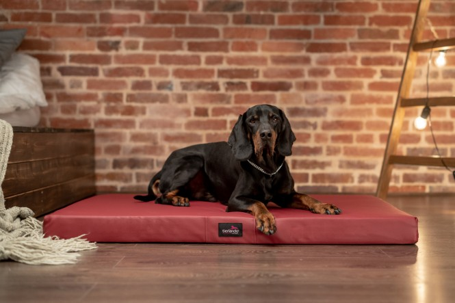 CARLOS | Orthopädische Hundematratze